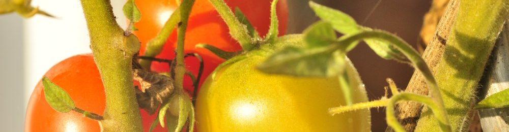 Obst und Gartenbauverein